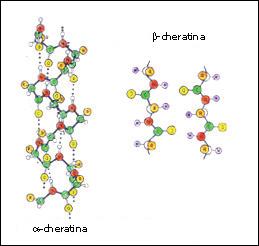 Химические связи в волосах